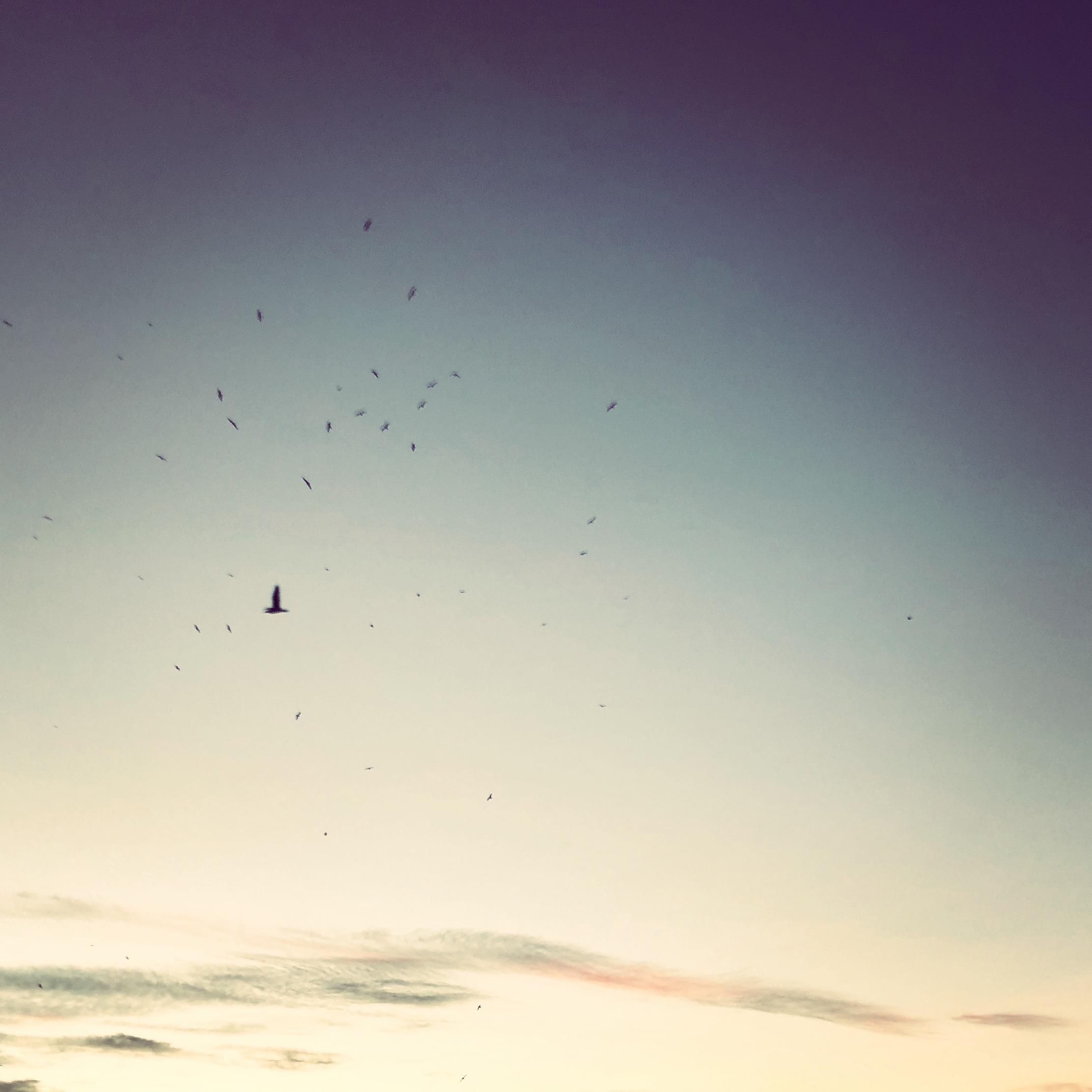 Blackbird – La playlist d'Anna Bambou – 3 août